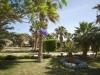 festtival-shedwan-golden-beach-resort-15