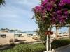 festtival-shedwan-golden-beach-resort-29